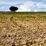 Há zonas do Baixo Alentejo em seca moderada