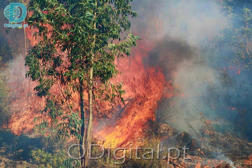 Incêndio em Évoramonte