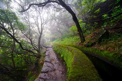 Floresta Laurissilva na Madeira