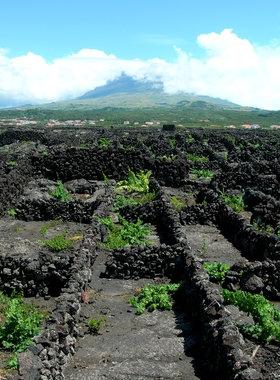 Paisagem da Cultural da Vinha da Ilha do Pico
