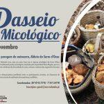 Câmara de Redondo desafia a conhecer as várias espécies de cogumelos da Serra D'Ossa