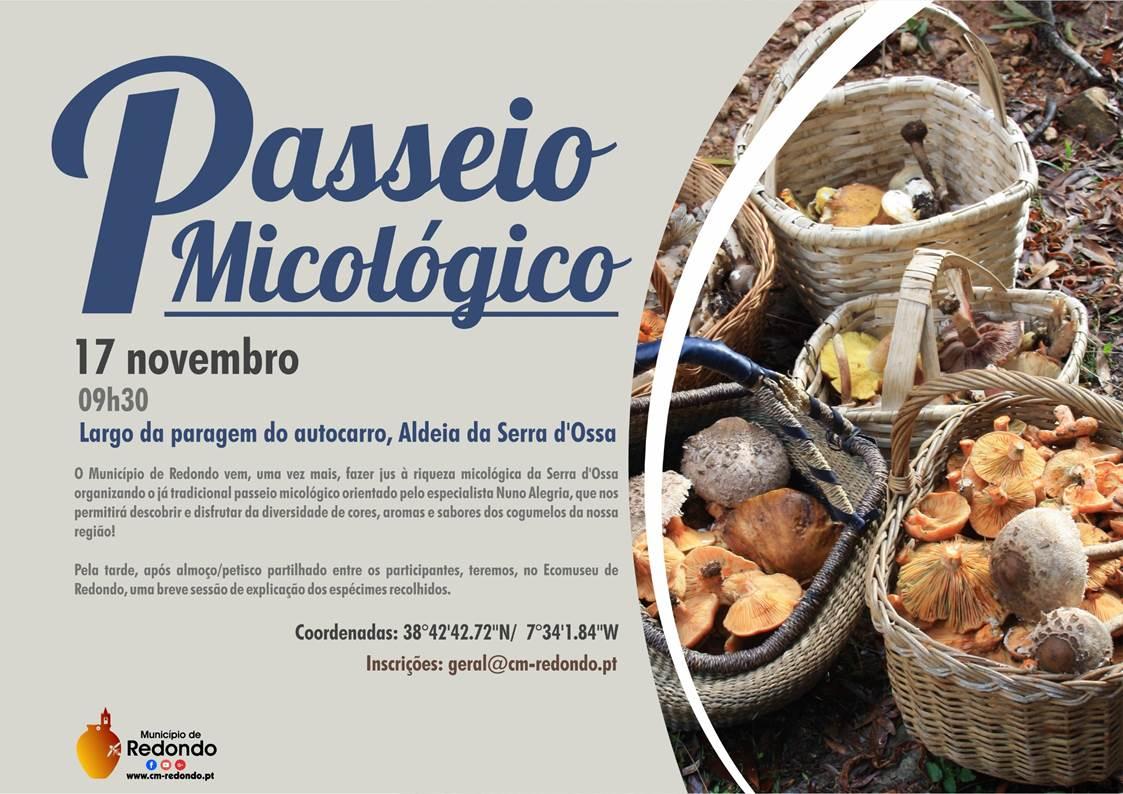 Câmara de Redondo desafia a conhecer as várias espécies de cogumelos da Serra D'Ossa - ODigital.pt
