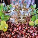 Castanhas: Quentes e boas… muito nutritivas e pode encontrá-las no Alentejo