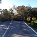 Vento forte faz cair cerca de uma dezena de árvores no Alentejo