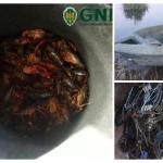 Serpa: GNR apreende vários quilos de lagostins e 41 armadilhas, por pesca em local não permitido