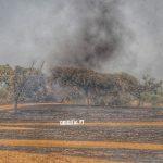 Alandroal: Incêndio mobilizou dezenas de operacionais junto a Cabeça de Carneiro (c/fotos)