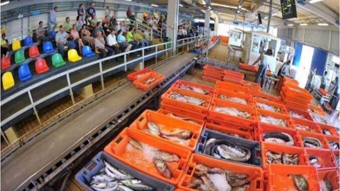Docapesca compra 8 toneladas de pescado