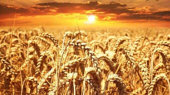 Quebra na produção de cereais