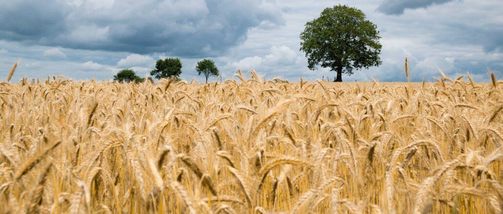 Agricultores satisfeitos