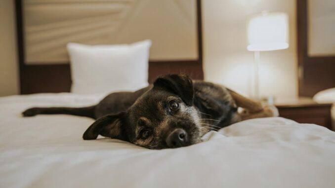 Hotel Marriot Lisboa recebe animais