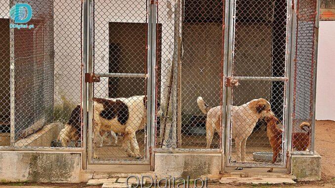 Centro de Recolha de animais