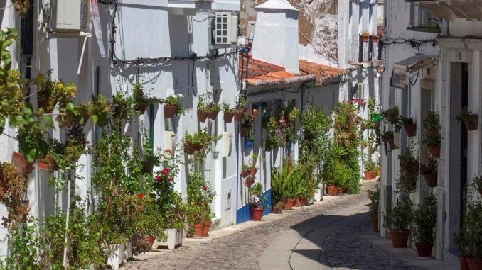 Ruas floridas em Moura