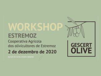 Workshop sobre azeitona
