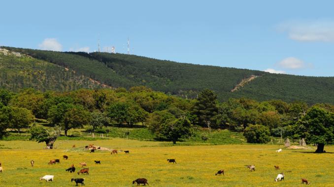 Serra de São Mamede