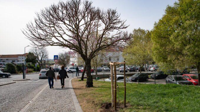 Arvores plantadas em Évora