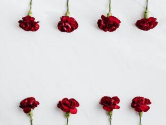 Cravos vermelhos