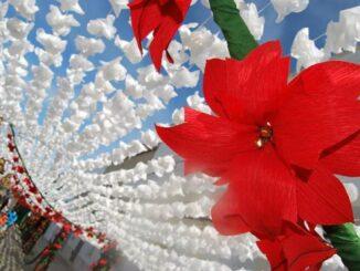 Flores de papel de Campo Maior