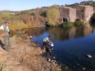 Pesca com verdemã