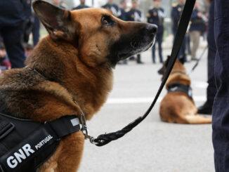 Cães GNR