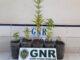 GNR de Grandola