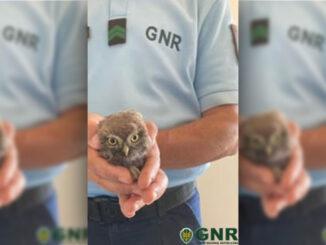 gnr resgata animais