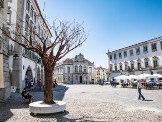 Arvore em Évora
