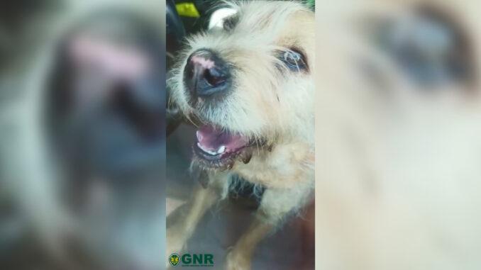 Cães resgatados