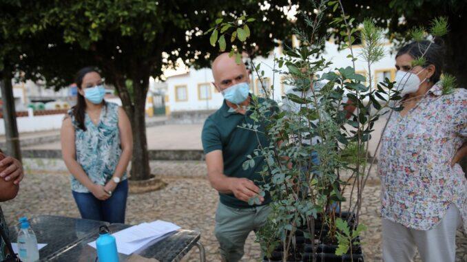 Plantar árvores em Viana do Alentejo