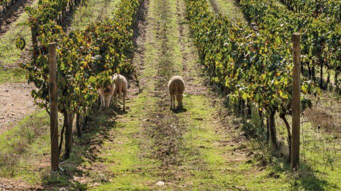 Programa de sustentabilidade vinhos do alentejo