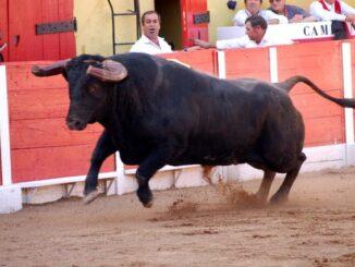 corrida de touros